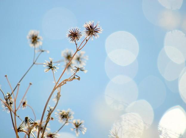 写真: 青の詩