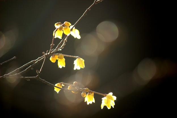 写真: 1月の詩