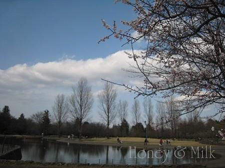 彩の森入間公園2 IMG_8520