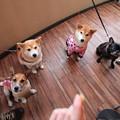 大阪&徳島犬連れ帰省旅行2017(友達に会う編&実家編)