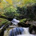 Photos: 秋色の渓谷