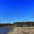 写真: 鴨の楽園♪