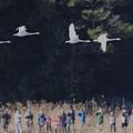 写真: 野鳥観察中♪