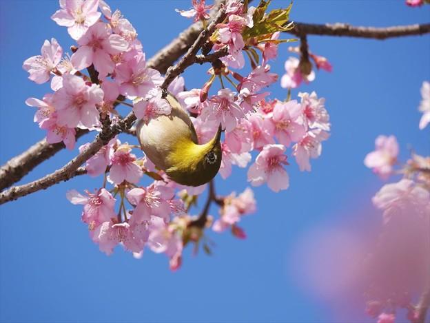 写真: 花とメジロ♪