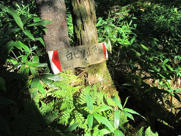 1405白ビソ山山頂標識