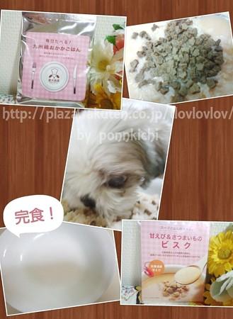 愛犬厨房 おためしBOX (58)