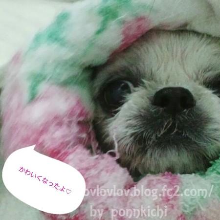 ソルヴ 犬用オーガニックシャンプー 防臭タイプ (31)