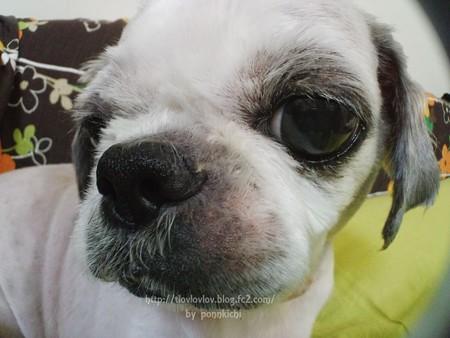ソルヴ 犬用オーガニックシャンプー 防臭タイプ (32)