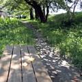 木漏れ日のベンチ