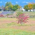 Photos: 遠野の秋
