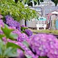 紫陽花沿線(1)