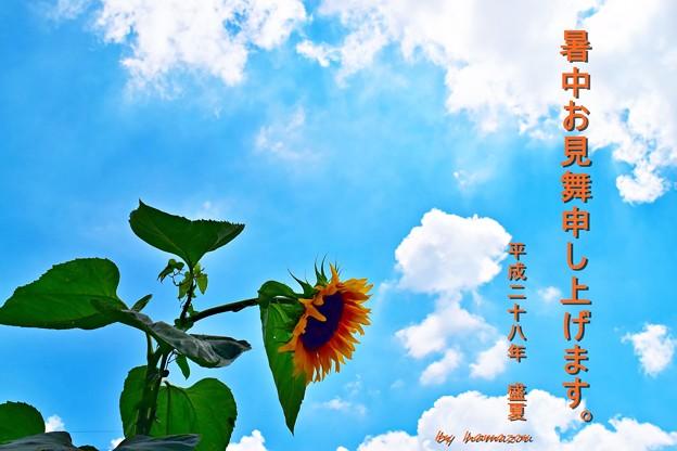 Photos: 梅雨明け暑中見舞