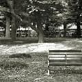 杜のベンチで