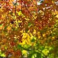 高尾山の秋景色(2)