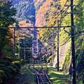 高尾山の秋景色(4)