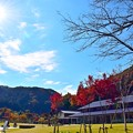 高尾山の秋景色(7)