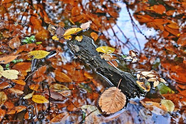 写真: 枯れ葉のステージ
