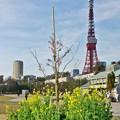 Photos: 花の東京