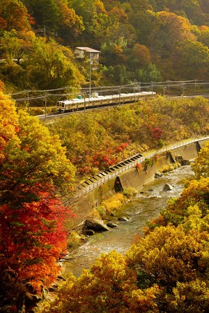 紅葉シーズンの諏訪峡を行く211系