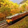 Photos: 紅葉シーズンの諏訪峡を行く115系その2