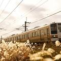 Photos: 逆光とススキと211系@八木原~渋川