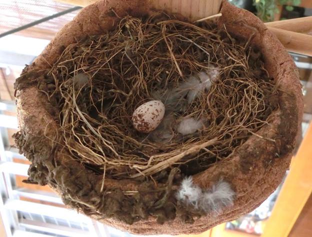 写真: 家の中の巣