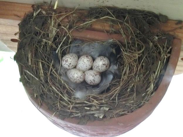 写真: 五個目(外の巣)