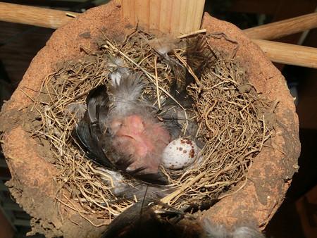 三羽生まれました