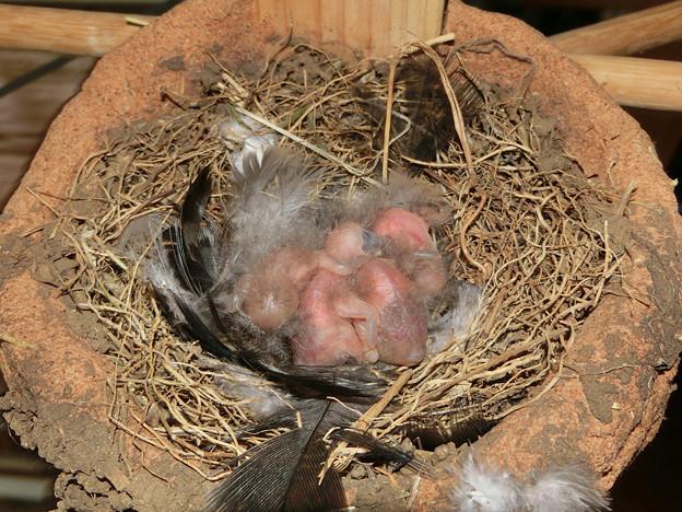 写真: 4羽さん誕生