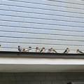 写真: 巣の見学