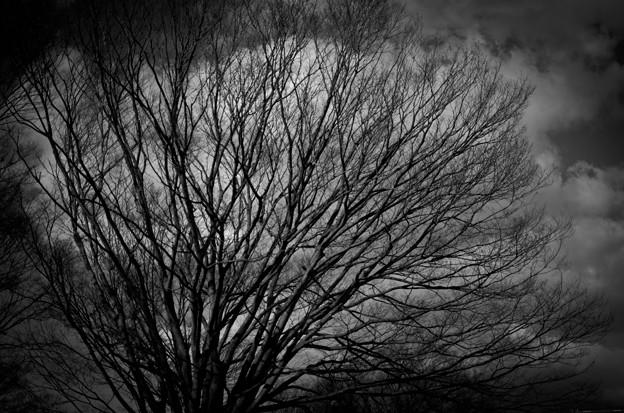 写真: 春を待つ・・・