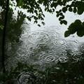 Photos: 残念な雨