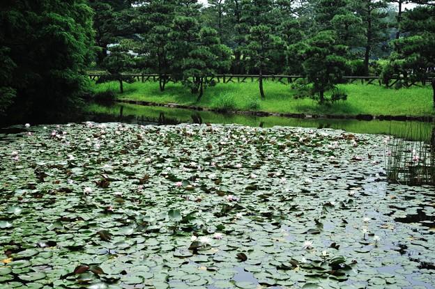 (神代植物公園・スイレン池の光景)