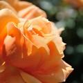 Photos: 神代植物公園_【アベイ・ド・クリュニー】