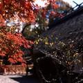 【歴史民俗博物館の紅葉】4