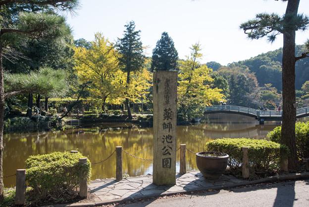 まだ紅葉にはちょっと早い薬師池公園です。