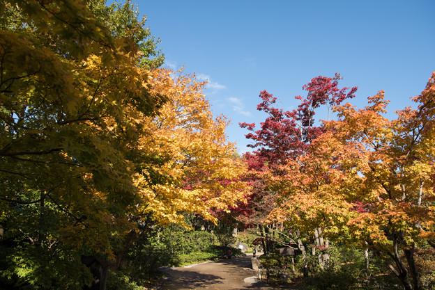 日本庭園の紅葉(1_1)