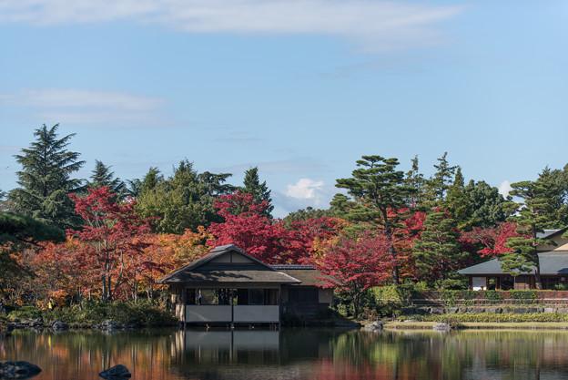 日本庭園の紅葉(1_3)清池軒の後ろは富士山なのだが