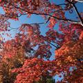 日本庭園の紅葉(1_5)