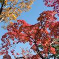 日本庭園の紅葉(2_2)