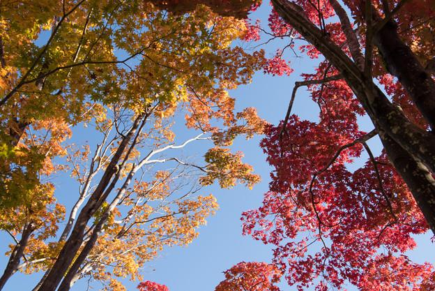 日本庭園の紅葉(2_4)