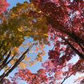 日本庭園の紅葉(3_2)