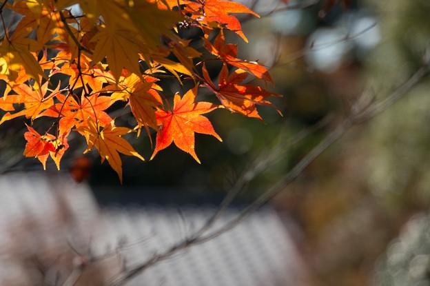 日本庭園の紅葉(4_3)