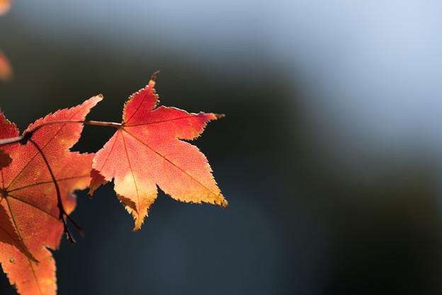 日本庭園の紅葉(4_4)