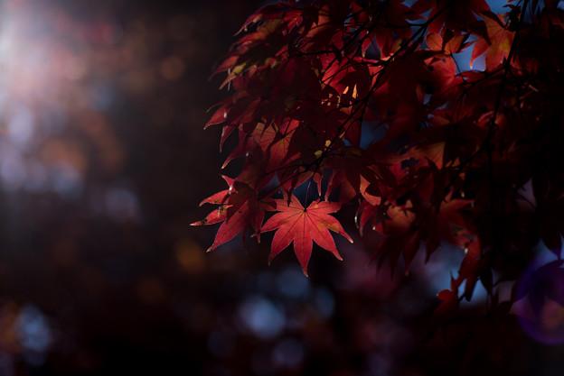 日本庭園の紅葉(4_5)