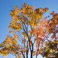 日本庭園の紅葉(6_1)