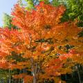 日本庭園の紅葉(6_2)