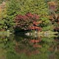 日本庭園の紅葉(7_3)