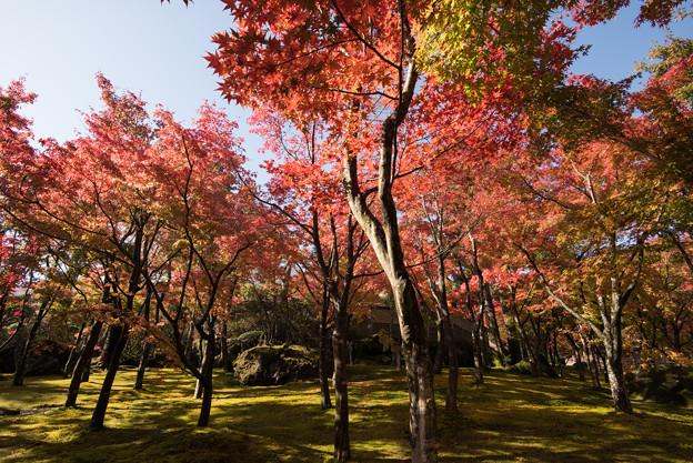 箱根美術館_庭園の様子1