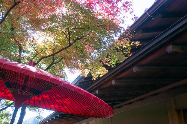 箱根美術館_右側が茶室「真和亭」